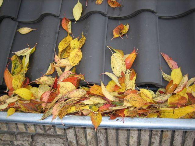 bladeren in de goot